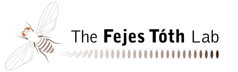 The Fejes Toth Lab